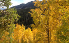 Aspens in the local Mountains 2013